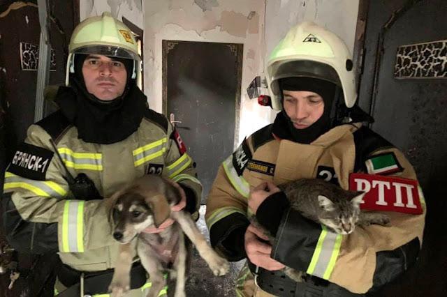 (Видео) Полицейские без передышки вытаскивали животных из приюта, чтобы спасти от сильнейшего пожара