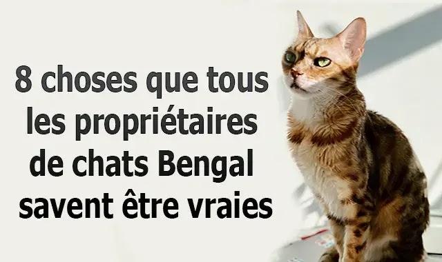 8 choses que tous les propriétaires de chats Bengal savent être vraies
