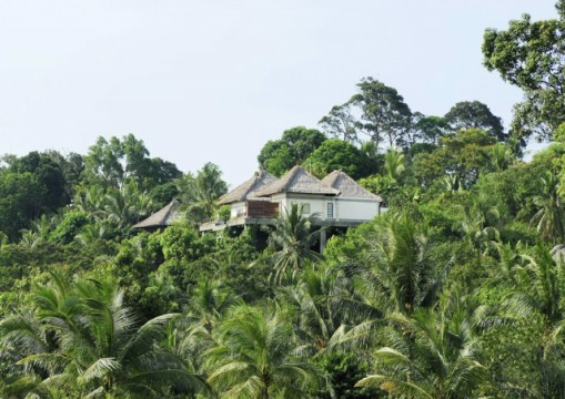 Banyan Tree Bintan's deluxe villa is in a rainforest setting, probably similar to the vegetation in Mandai.