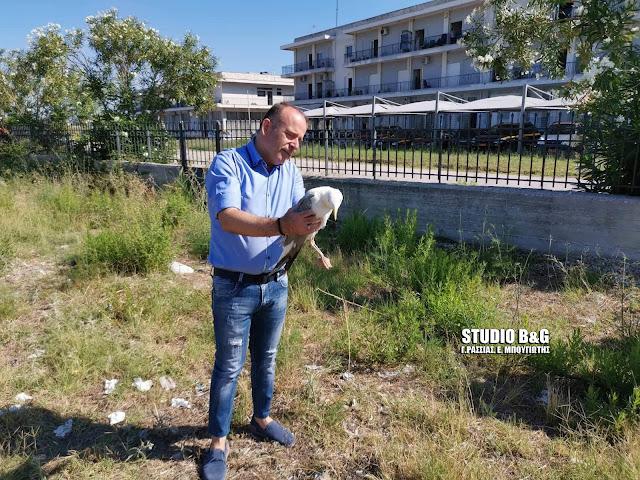 Τραυματισμένος γλάρος στο Ναύπλιο - Μεταφέρθηκε σε κέντρο αποκατάστασης