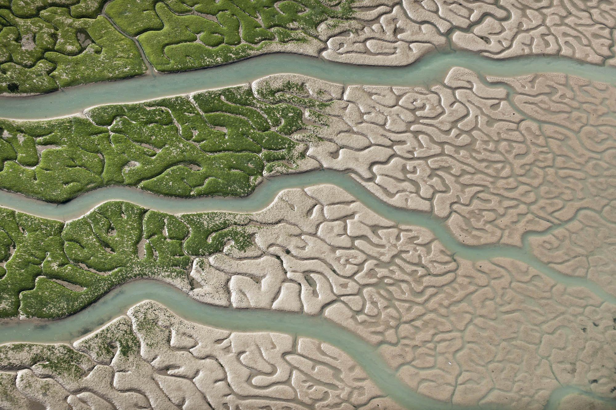 Biofilia: reconectar el hombre a la naturaleza