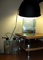 mech w terrarium