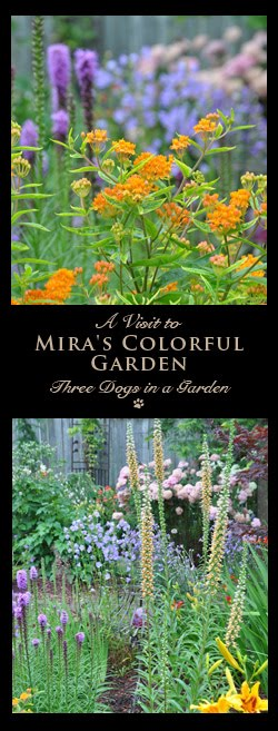 A Visit to Mira's Colorful Garden
