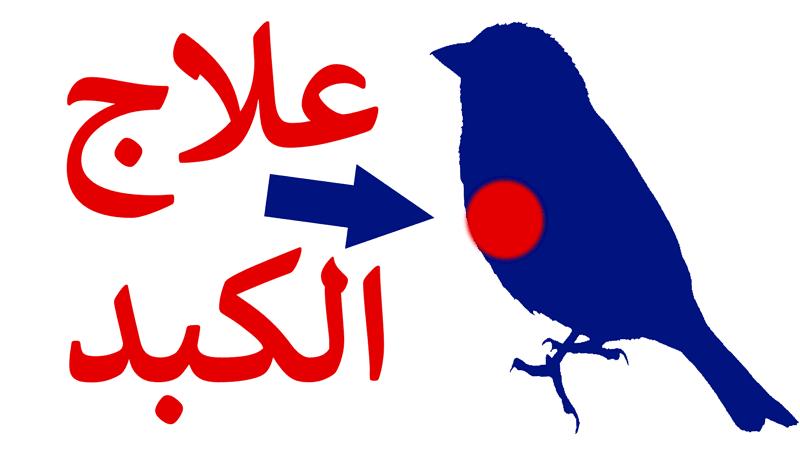 إلتهاب الكبد عند الطيور أعراضه وعلاجه