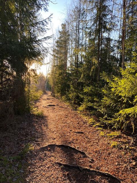 #trailrunning #polkujuoksu #pullantuoksuinenkoti #metsä #lohja #outdoors #hyvinvointi #wellness #forest