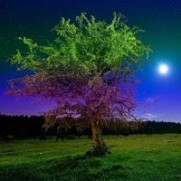Games2rule-Fireflies Nigh…