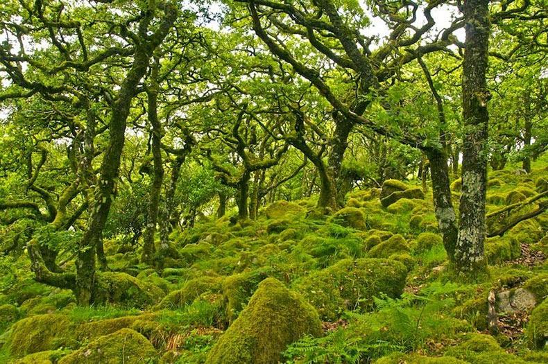 El bosque embrujado de Wistman | Inglaterra