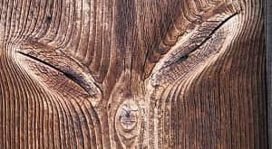 Cacat-cacat kayu biasanya diakibatkan oleh berbagai faktor mulai dari faktor internal (faktor yang berasal dari dalam kayu) maupun dari faktor eksternal (faktor yang berasal dari luar kayu seperti organisme-organisme tertentu). Cacat kayu merupakan suatu kelainan yang terdapat dalam sebatang kayu sehingga mempengaruhi mutu dan isi kayu (Ardhiansyah et al, 2019). Jenis-jenis cacat kayu serta pengaruhnya yang dikemukakan oleh Dumanauw (1990) adalah sebagai berikut: