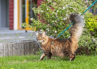 """¿Por qué los gatos responden al """"Pss""""? - 6 hechos sorprendentes"""