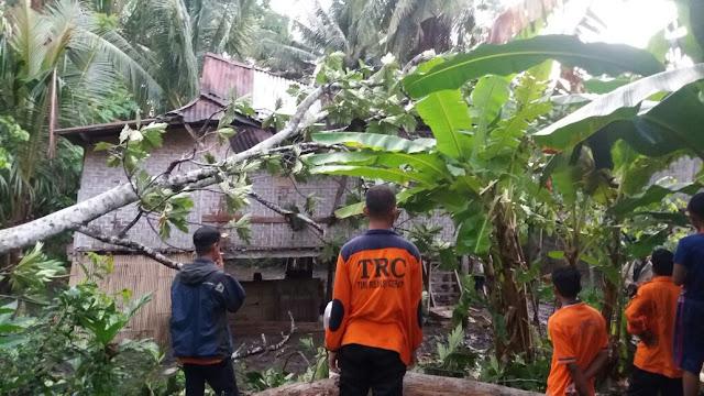 Cuaca Ekstrim, Rumah Di Soppeng Tertimpa Pohon