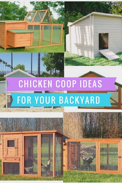 Chick Coop ideas and plans for small areas