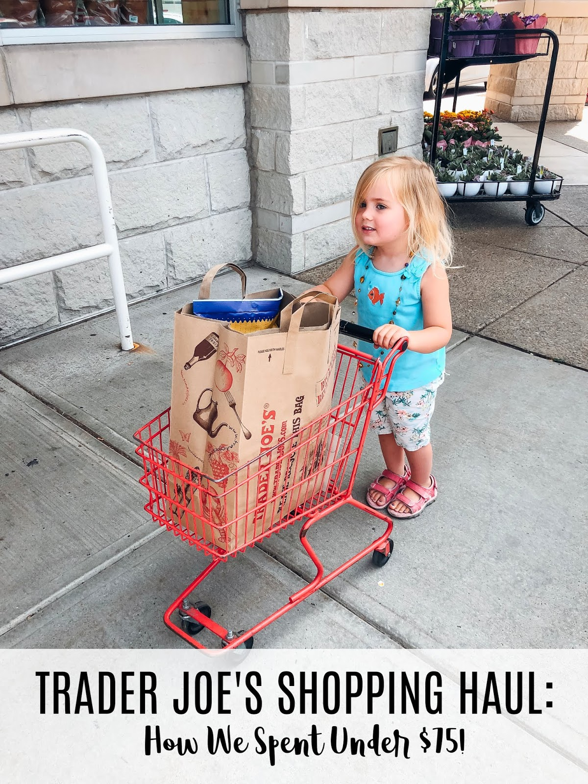 Trader Joe's Grocery Shopping Haul: How We Spent $75