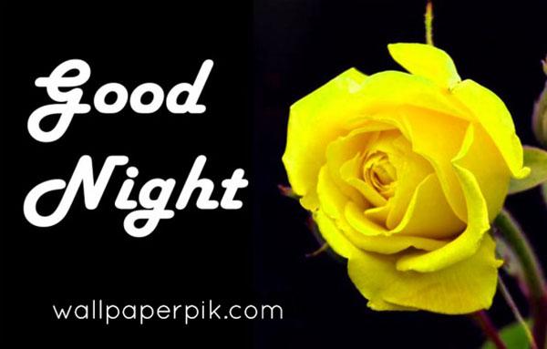 yellow rose  good night images