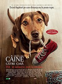 Drumul unui Câine către Casă Film Dublat în Română