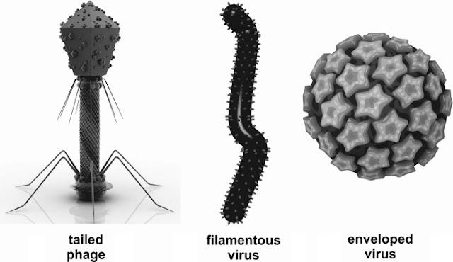 different viruses