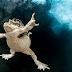 Concurso de fotografia premia as melhores imagens da vida na Terra