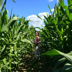 Lost in Escobar Farm RI_Wizard of Oz Corn Maze_New England Fall Events