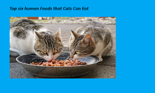What Do Cats Eat: 6 common human foods that cats can eat