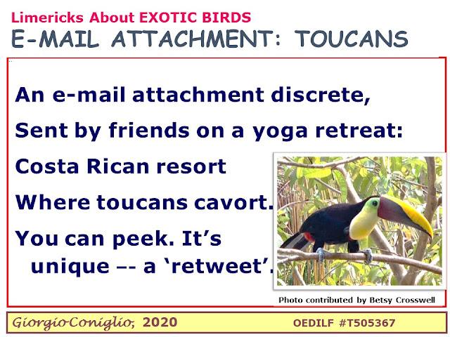 limerick; Costa Rica; holidays; yoga; toucan; email; photography; Giorgio Coniglio
