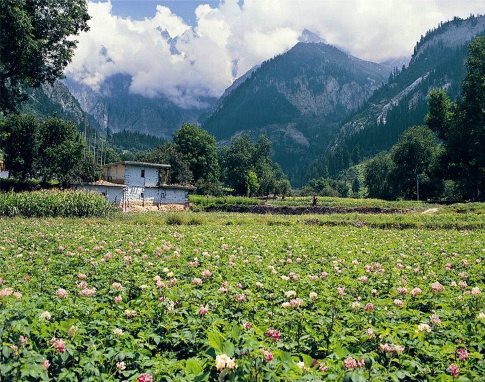 Matiltan (Ushu), Upper Swat Valley, Pakistan