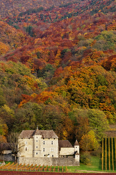 Autumn colors around Mecoras castle