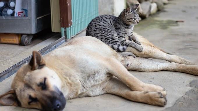 Αντιμέτωπος με κάθειρξη έως και 10 έτη όποιος θανατώνει ή βασανίζει ζώο