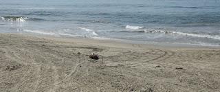 Một người đi biển tận hưởng không gian trống trên bãi biển khi dầu tràn ngoài khơi California tràn vào bờ biển Huntington, California, Hoa Kỳ ngày 3 tháng 10 năm 2021. REUTERS / Gene Blevins
