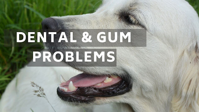 Dental & Gum Problems