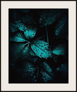 plakat, plakat z liściem, plakat z liściem w kroplach, plakat darkmood, plakat z liśćmi, plakat w kroplach deszczu, plakat roślinny, plakat A3, plakat pionowy, plakat z winobluszczem, plakat z dzikim winem
