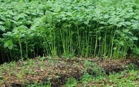 Peluang Ide Bisnis Pertanian Untuk Pemula
