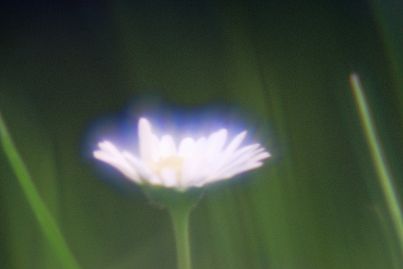 Brillenglasobjektiv #6 — Gänseblümlein mit Elmsfeuer