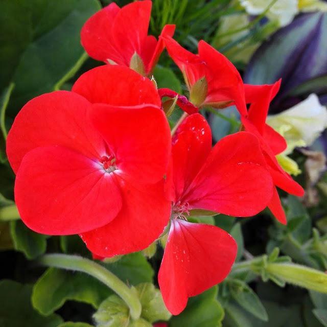 Flowers and Spring Blooms I Quimper I France