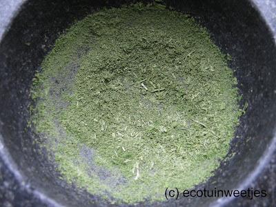 Groene selder drogen in de winter en fijnmalen in de vijzel