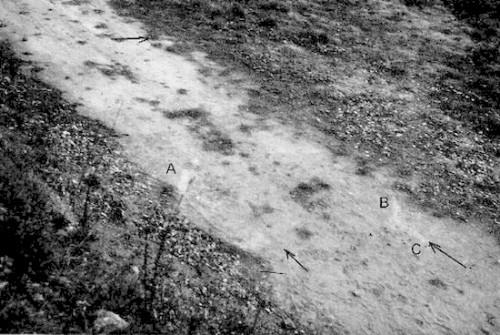 Nông dân Pháp phát hiện UFO hạ cánh trên sân vườn nhà mình