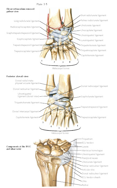 LIGAMENTS OF WRIST