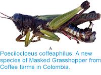 https://sciencythoughts.blogspot.com/2018/11/poecilocloeus-coffeaphilus-new-species.html