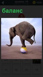Слон стоит на мяче сохраняет баланс на одной ноге, хобот он опустил вниз