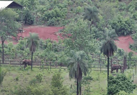 Elefantes-santuário