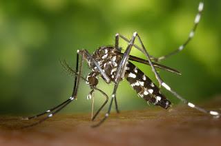 Cara Mudah Untuk Mencegah Demam Berdarah Dengue ( DBD )