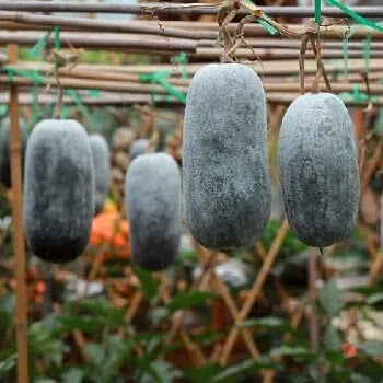 पांढरा भोपळा, white gourd vegetables name in Marathi