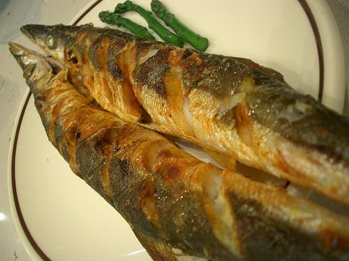 Behind the french menu brochet pike the fish brochet for Pictures of pike fish