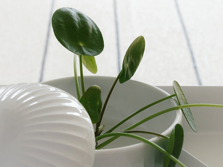 Deko-Ideen mit Pflanzen | Lieblinge und Inspirationen der Woche | Personal Lifestyle, DIY and Interior Blog | Auf der Mammiladen-Seite des Lebens