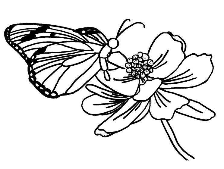 Gambar Gambar Mewarnai Kupu Bunga Terbaru Gambarcoloring