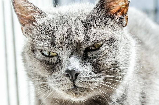 Kedi Davranışlarının Anlamları