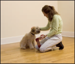puppy petting