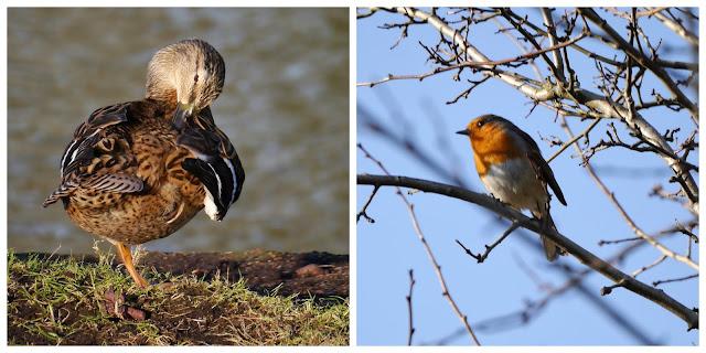Birds at Bodiam Castle