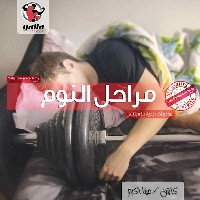 فى أى مرحلة من النوم تشفى العضلات وتفرز الهرمونات !؟