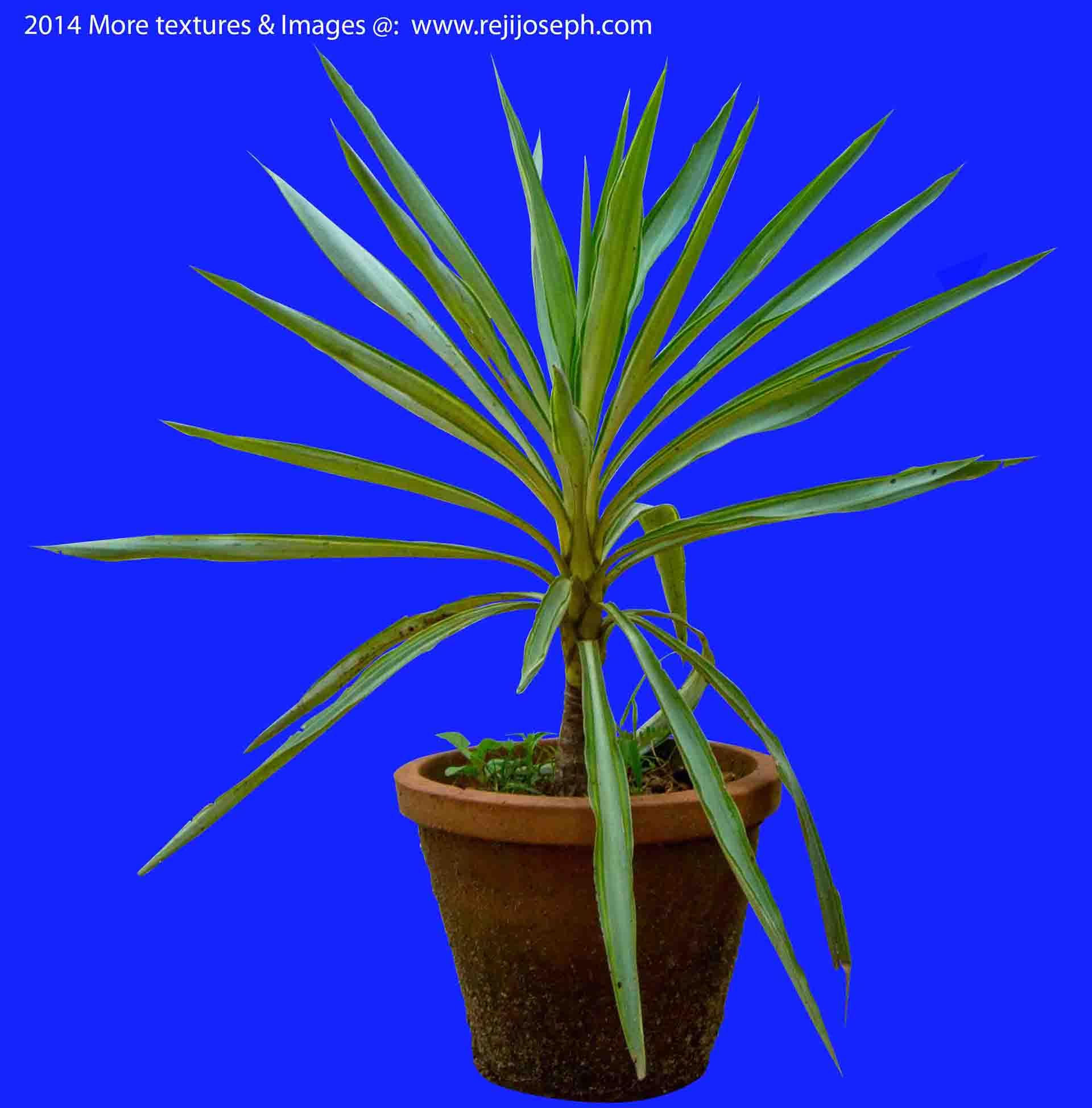 Garden Plant texture 00007