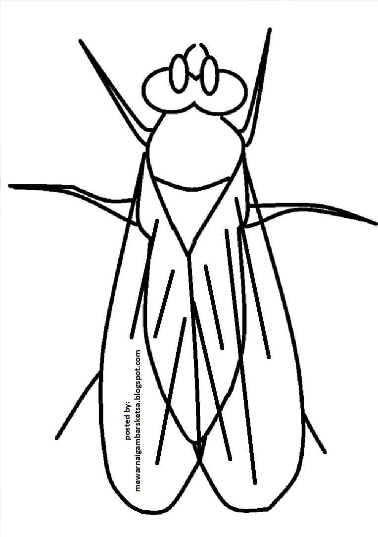 Mewarnai Gambar Sketsa Hewan Lalat 1