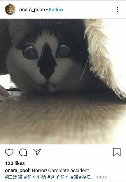 10 Foto Kucing yang Tampak Menyeramkam